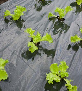 Takarófólia salátáshoz, fekete 0,95mx5m, előre lyukasztott.