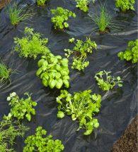 Takarófólia kis zöldségekhez, fekete 0,95mx5m, előre lyukasztott.