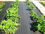 Agroszövetek, talajtakaró geotextilek, fátyolfóliák.